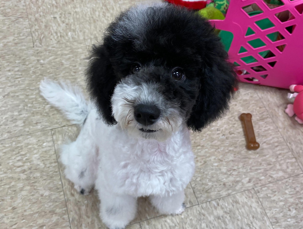 Dog Grooming Cost
